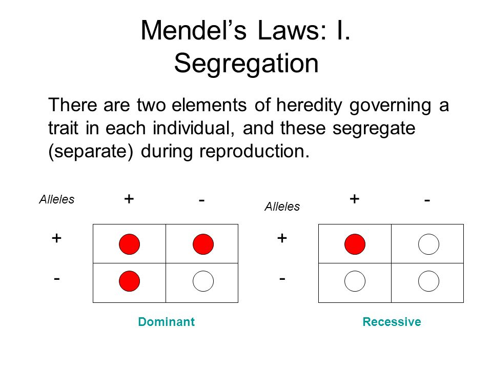 Mendels Laws: I. Segregation There are two elements of heredity governing a trait in each individual, and these segregate (separate) during reproducti