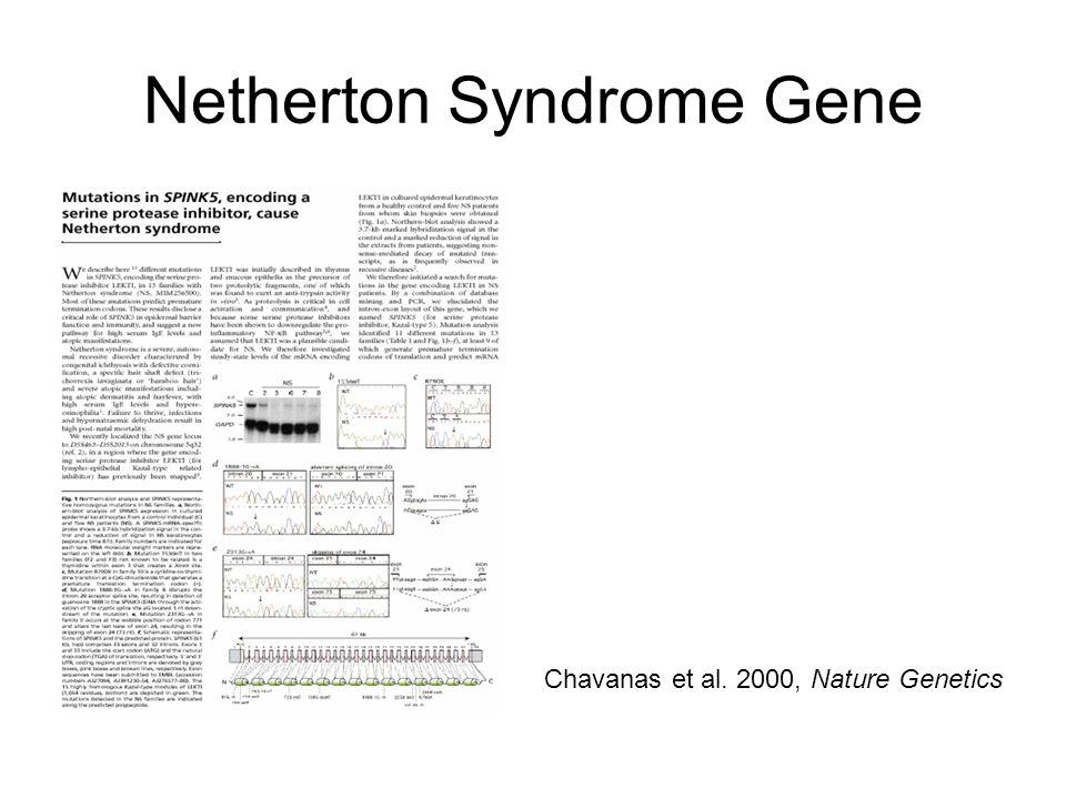 Netherton Syndrome Gene Chavanas et al. 2000, Nature Genetics