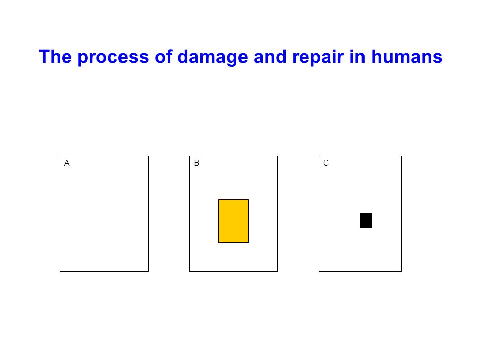 The process of damage and repair in humans ABC