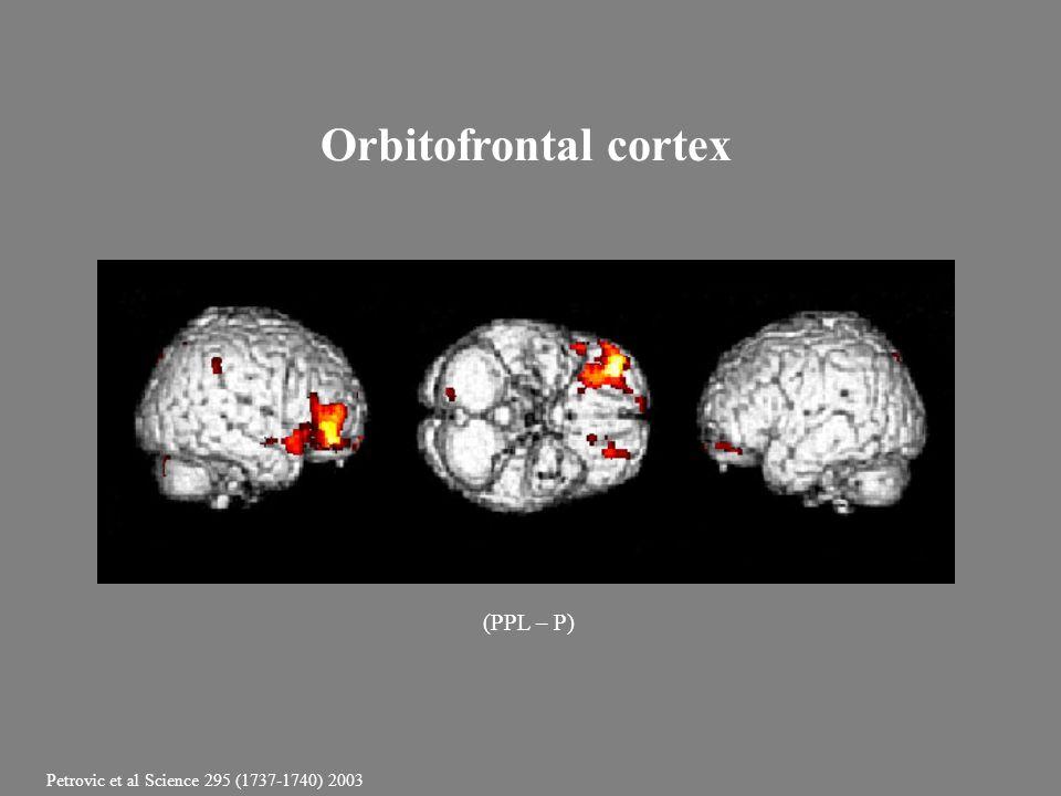 Orbitofrontal cortex (PPL – P) Petrovic et al Science 295 (1737-1740) 2003