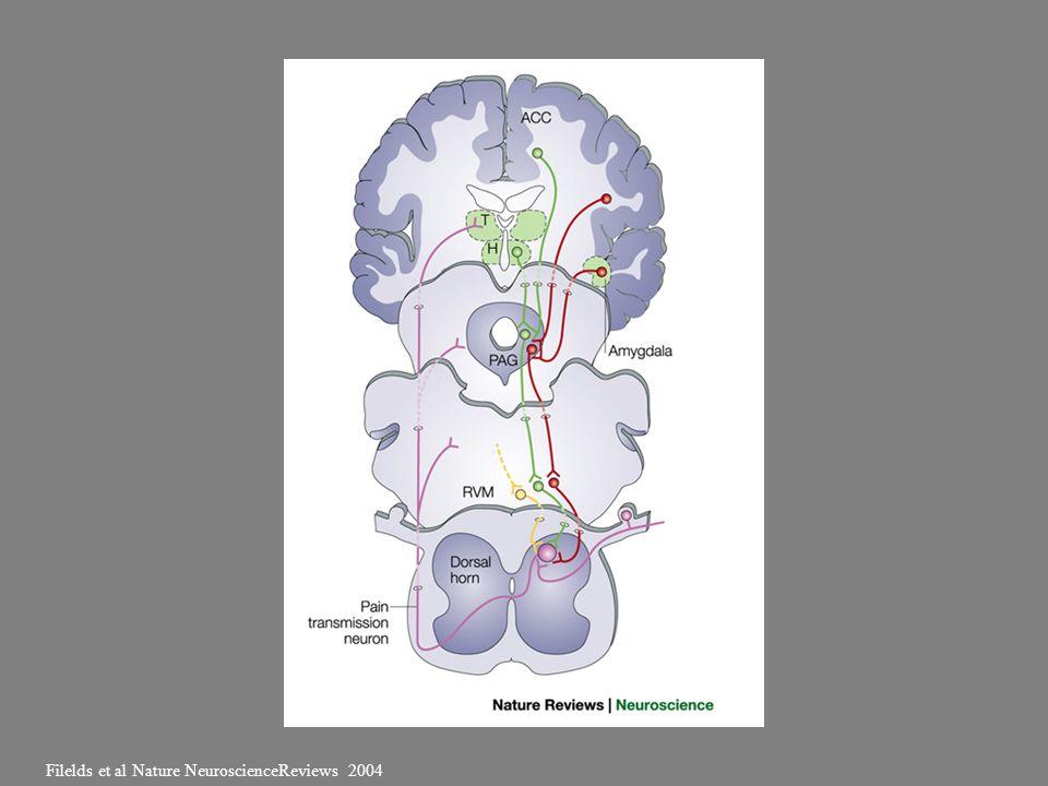 Filelds et al Nature NeuroscienceReviews 2004