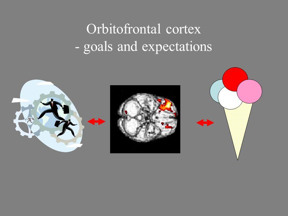 Orbitofrontal cortex - goals and expectations