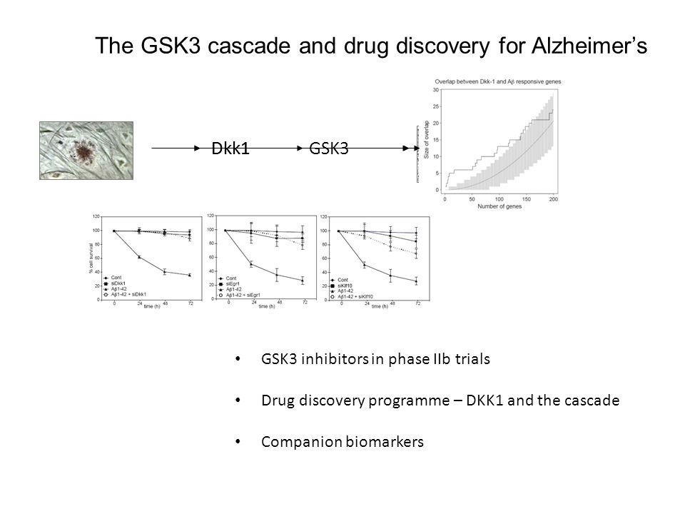 The GSK3 cascade and drug discovery for Alzheimers GSK3 inhibitors in phase IIb trials Drug discovery programme – DKK1 and the cascade Companion biomarkers Dkk1GSK3Dkk1