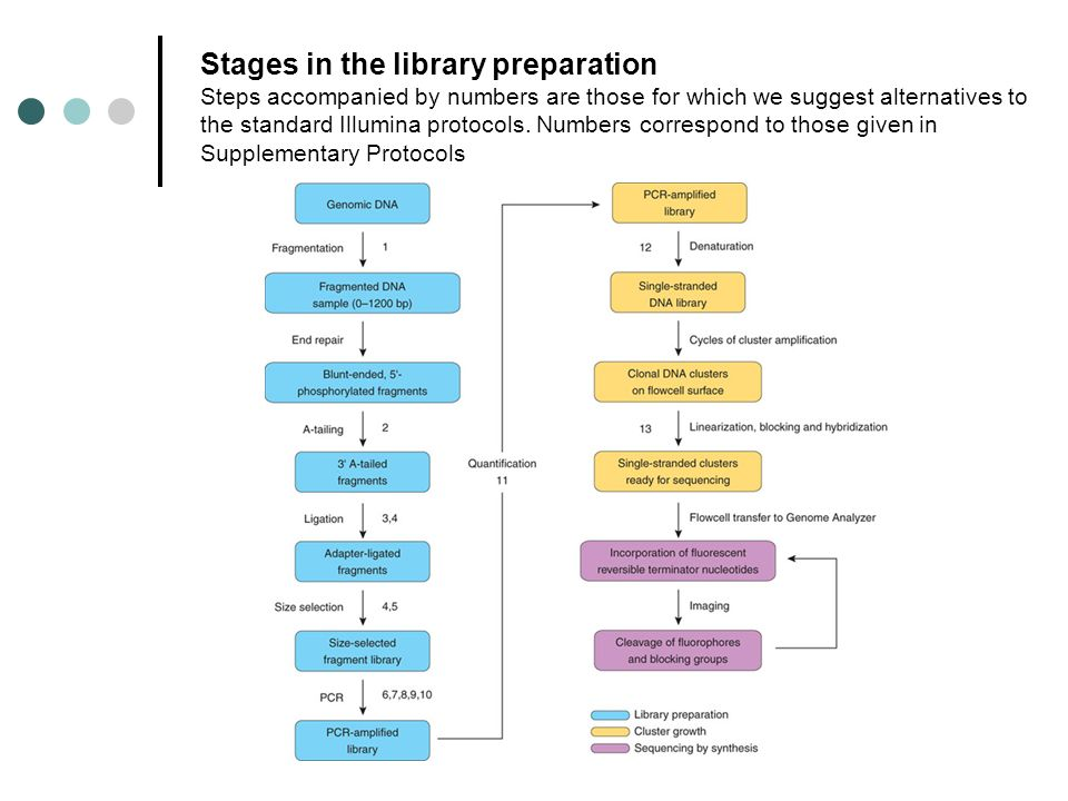 Stages in the library preparation Steps accompanied by numbers are those for which we suggest alternatives to the standard Illumina protocols. Numbers