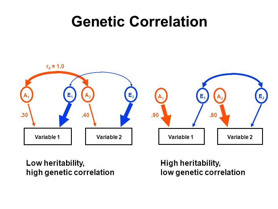 A1A1 E1E1.30 A2A2 E2E2.40 r A = 1.0 Variable 1Variable 2 Variable 1 A1A1 E1E1.90 A2A2 E2E2.80 Variable 2 Genetic Correlation High heritability, low ge
