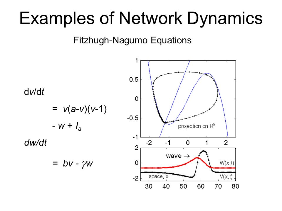 Examples of Network Dynamics Fitzhugh-Nagumo Equations dv/dt = v(a-v)(v-1) - w + I a dw/dt = bv - w v = membrane potential w = substitute for ion channel variables I a = applied current a, b, are constants 0 < a < 1 b, 0