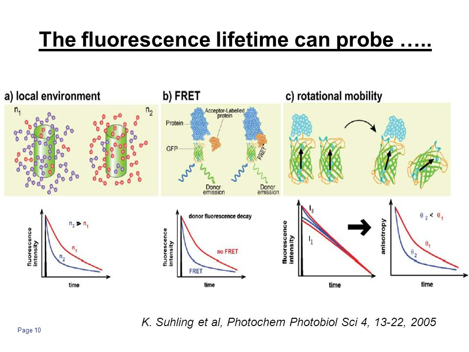 Page 10 The fluorescence lifetime can probe …..> K.