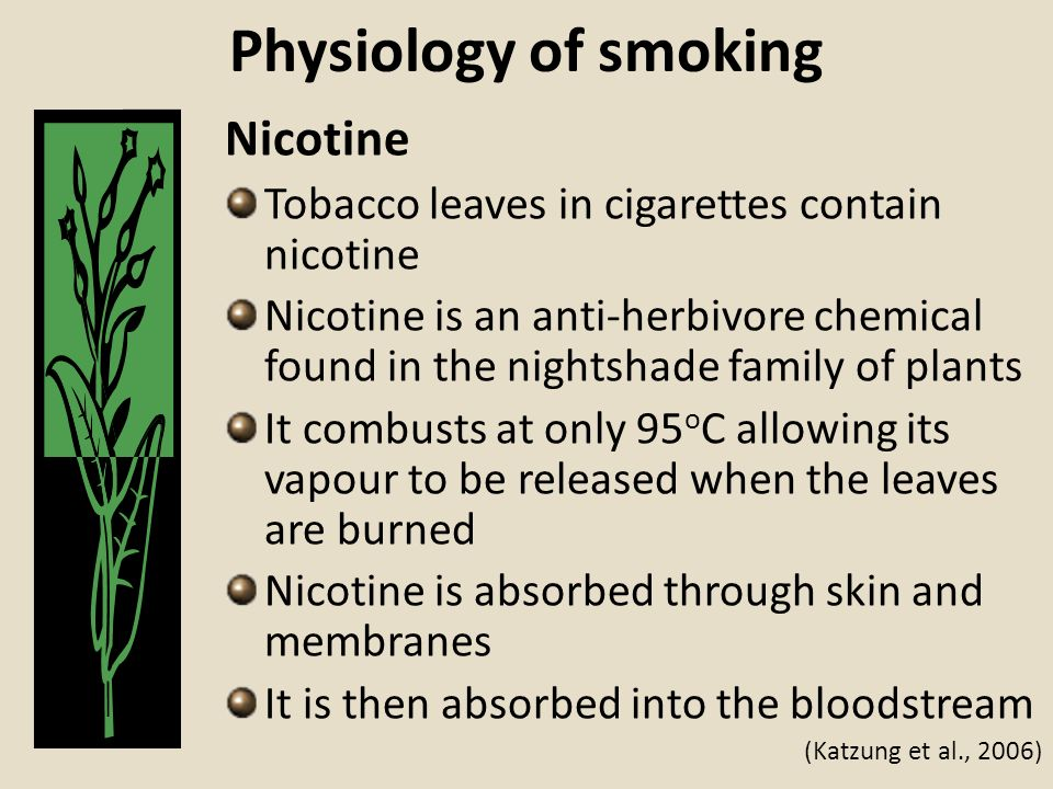 Physiology of smoking Nicotine Tobacco leaves in cigarettes contain nicotine Nicotine is an anti-herbivore chemical found in the nightshade family of