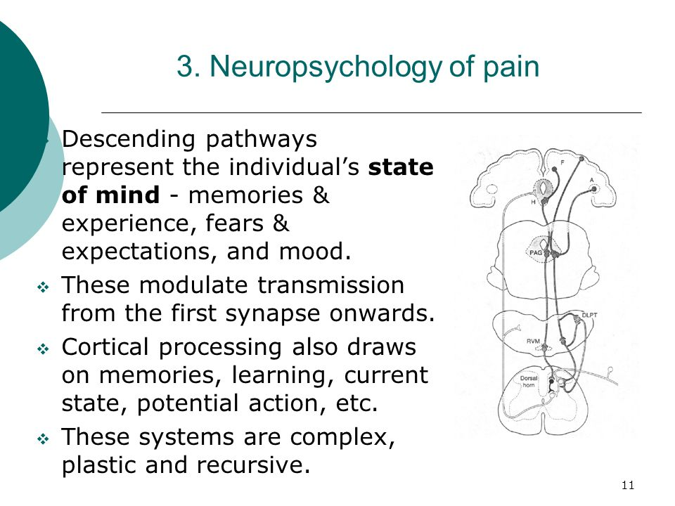 11 3. Neuropsychology of pain Descending pathways represent the individuals state of mind - memories & experience, fears & expectations, and mood. The