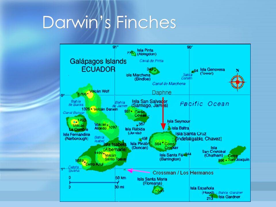 Darwins Finches Galápagos Islands