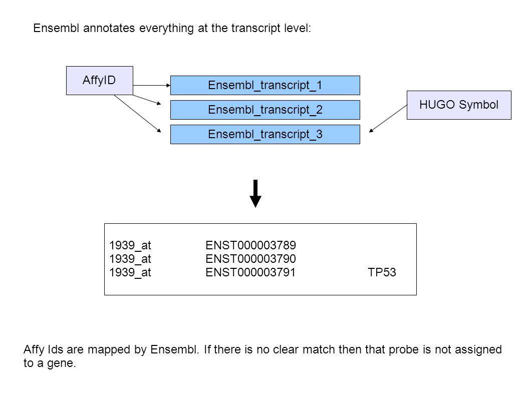 Ensembl annotates everything at the transcript level: Ensembl_transcript_1 Ensembl_transcript_2 Ensembl_transcript_3 AffyID HUGO Symbol 1939_at ENST00