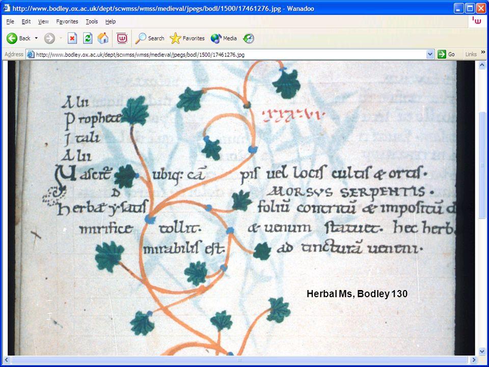 Herbal Ms, Bodley 130