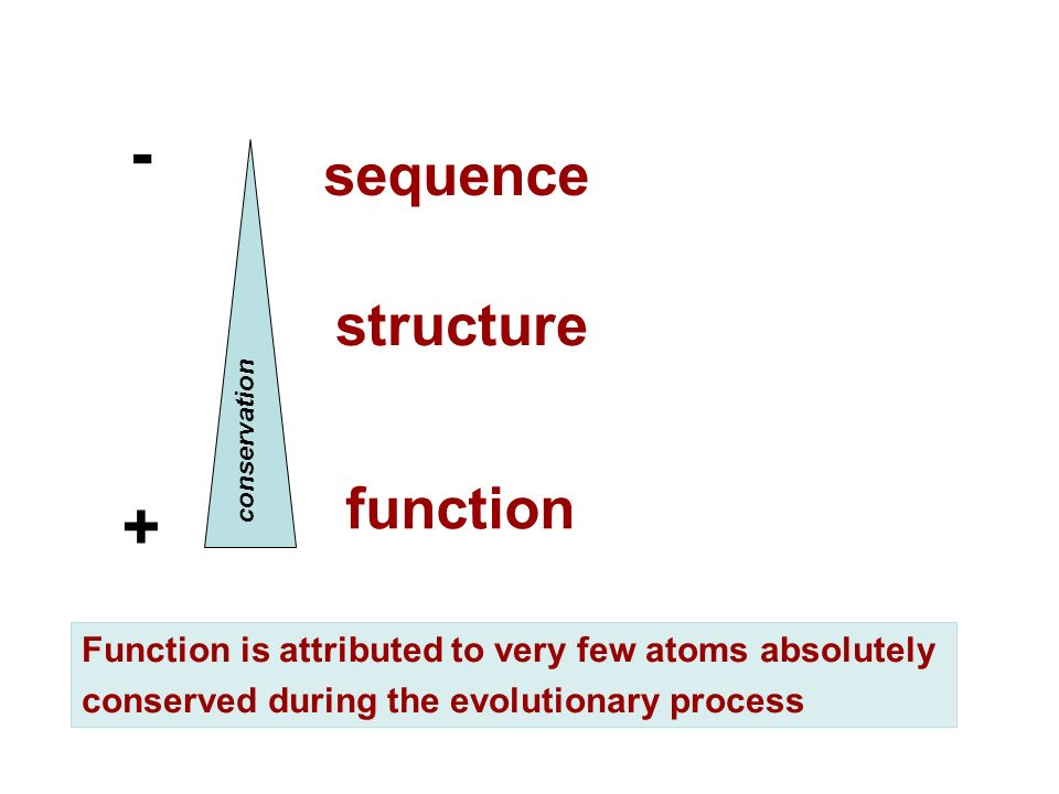 sequence structure function - + conservation Function is attributed to very few atoms absolutely conserved during the evolutionary process