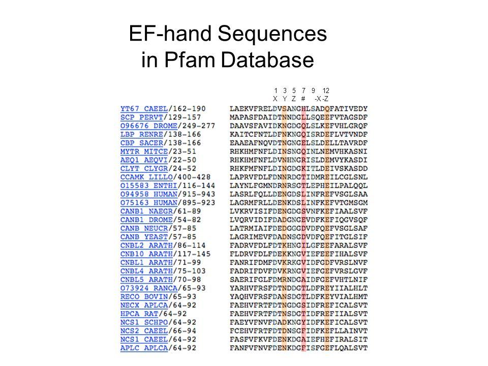 EF-hand Sequences in Pfam Database -Z-X#ZYX 1357912