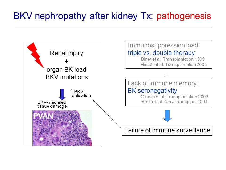 Renal injury + organ BK load BKV mutations PVAN BKV replication BKV-mediated tissue damage Immunosuppression load: triple vs. double therapy Binet et