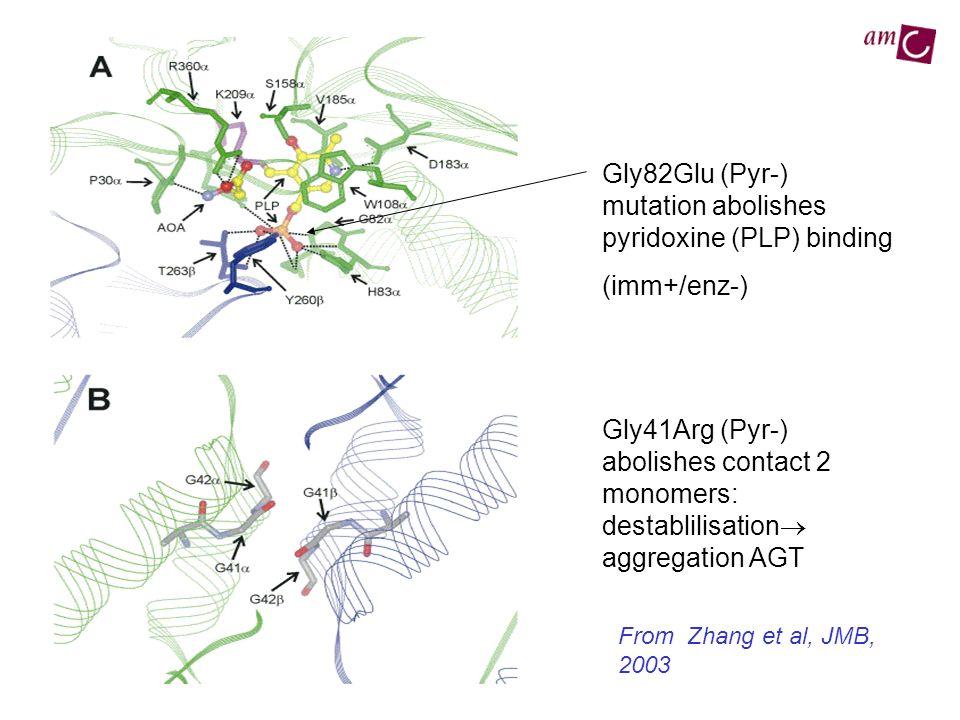 Gly82Glu (Pyr-) mutation abolishes pyridoxine (PLP) binding (imm+/enz-) Gly41Arg (Pyr-) abolishes contact 2 monomers: destablilisation aggregation AGT