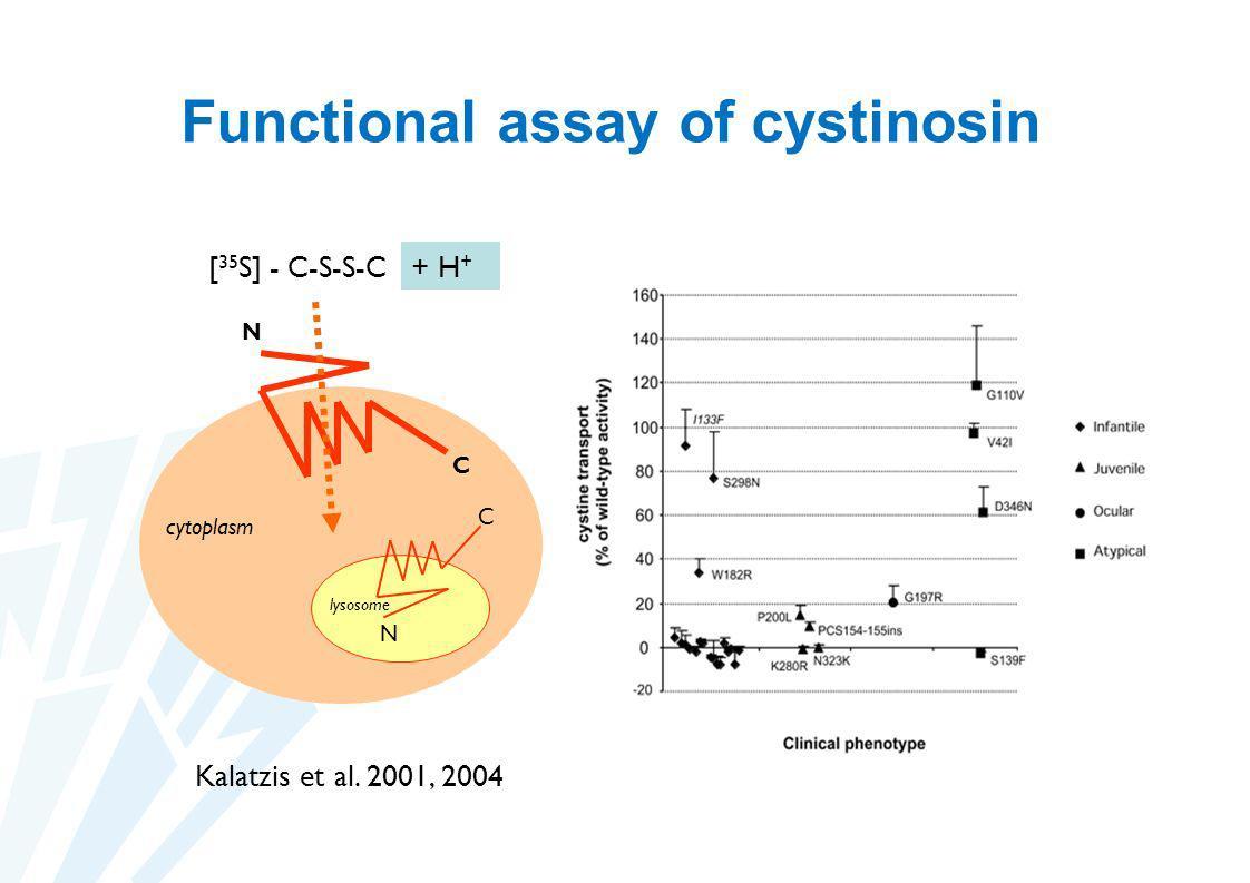 Functional assay of cystinosin C N C N [ 35 S] - C-S-S-C lysosome cytoplasm Kalatzis et al. 2001, 2004 + H +