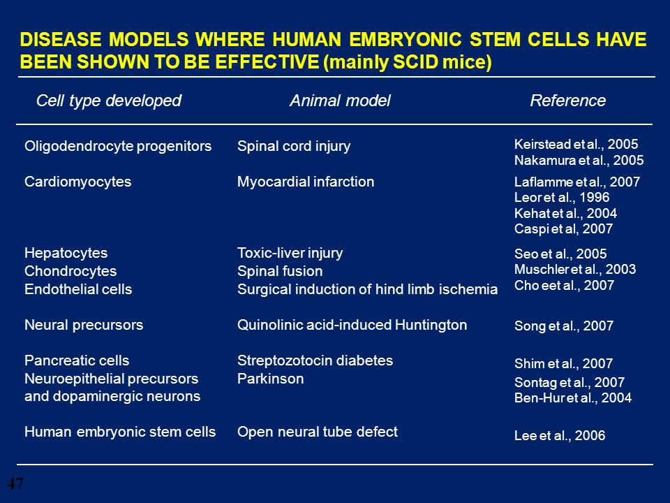 47 DISEASE MODELS WHERE HUMAN EMBRYONIC STEM CELLS HAVE BEEN SHOWN TO BE EFFECTIVE (mainly SCID mice) Cell type developedAnimal modelReference Oligode