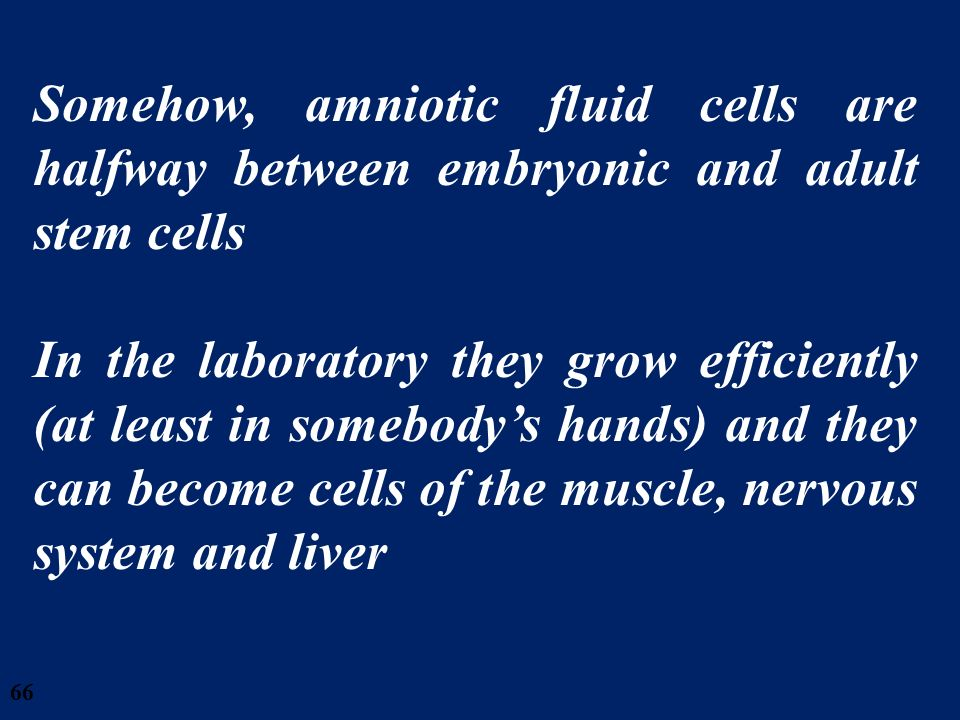 66 Somehow, amniotic fluid cells are halfway between embryonic and adult stem cells In the laboratory they grow efficiently (at least in somebodys han