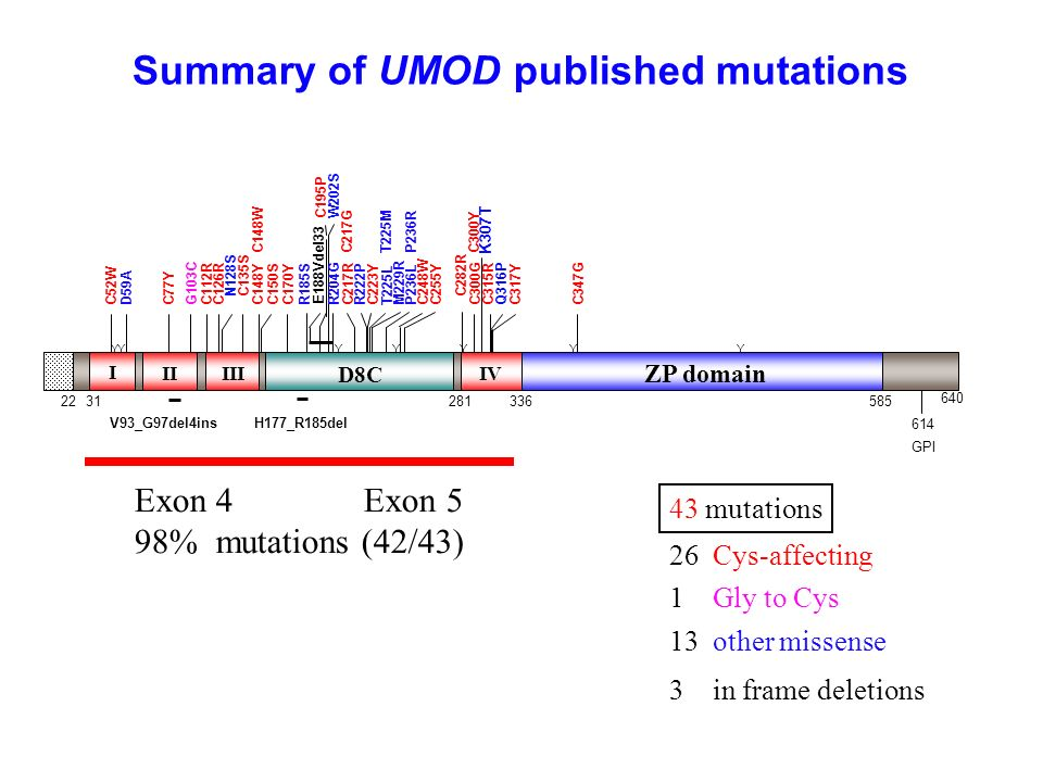 Summary of UMOD published mutations 43 mutations 26 Cys-affecting 1 Gly to Cys 13 other missense 3 in frame deletions Exon 4 Exon 5 98% mutations (42/