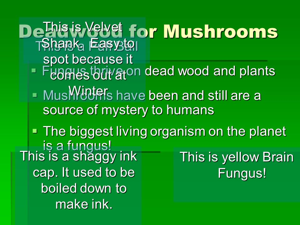 The biggest living organism on the planet is a fungus.