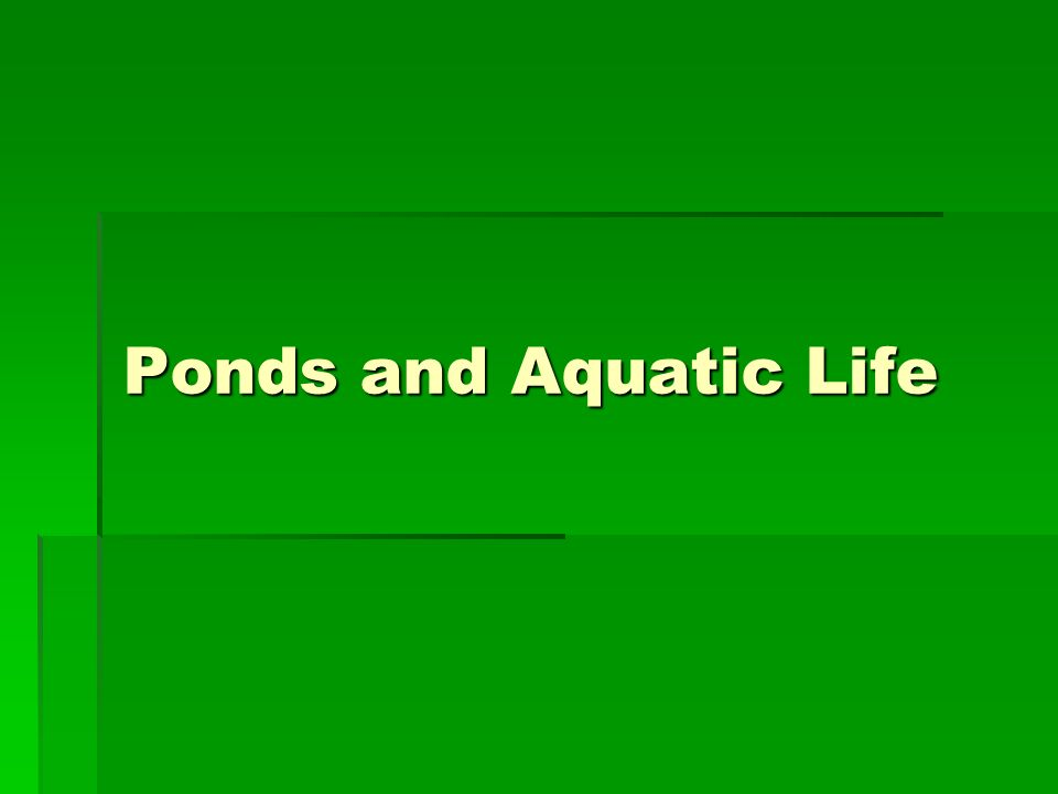 Ponds and Aquatic Life