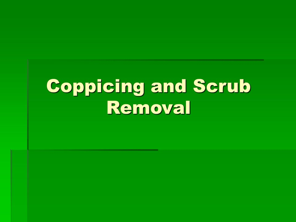 Coppicing and Scrub Removal
