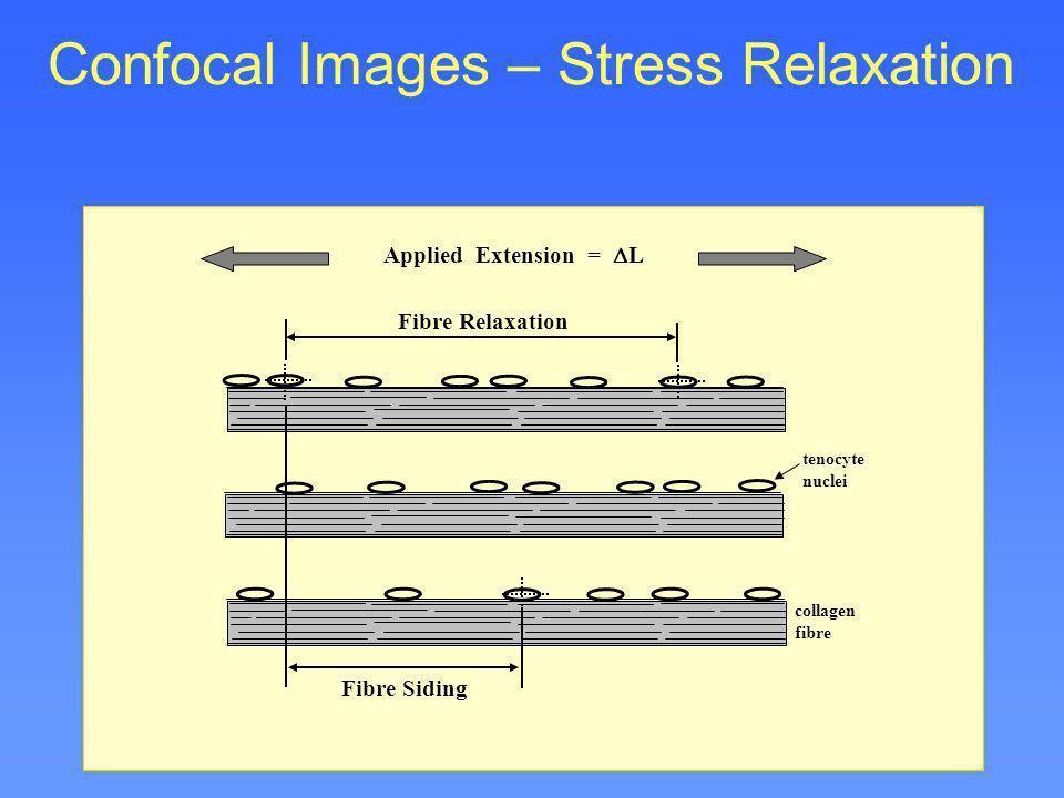 Fibre Relaxation Fibre Siding collagen fibre tenocyte nuclei Applied Extension = L Confocal Images – Stress Relaxation