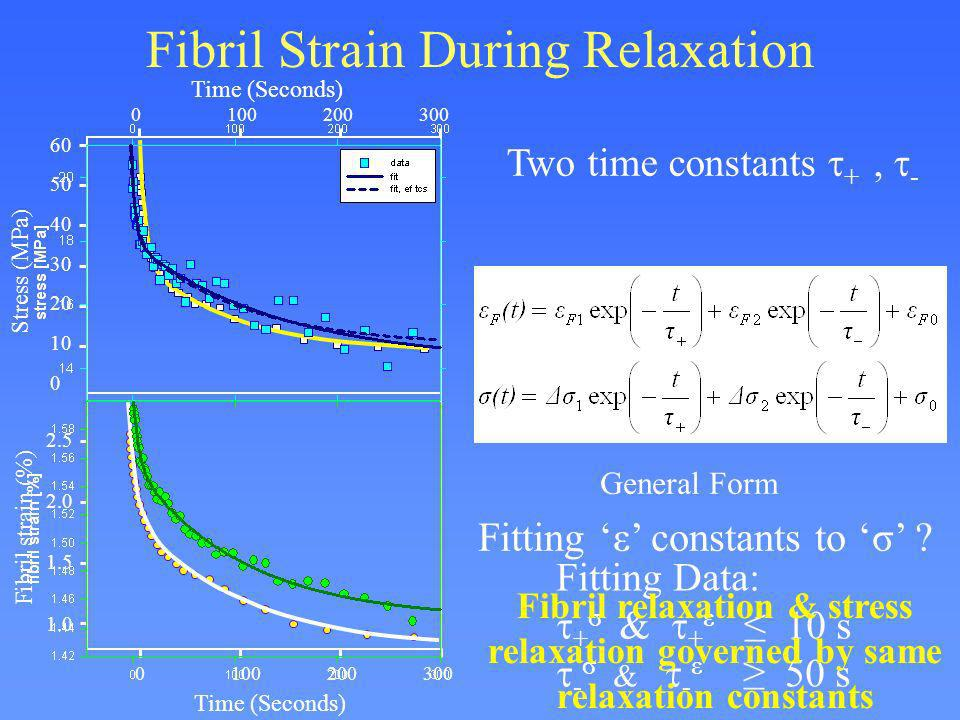 Fibril Strain During Relaxation Two time constants +, - General Form Stress (MPa) Fibril strain (%) 60 50 40 30 20 10 0 0100200300 Time (Seconds) 2.5