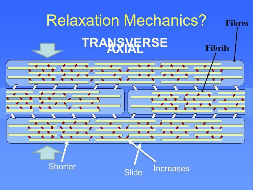 Relaxation Mechanics? Fibrils Fibres Shorter Slide AXIAL TRANSVERSE Increases