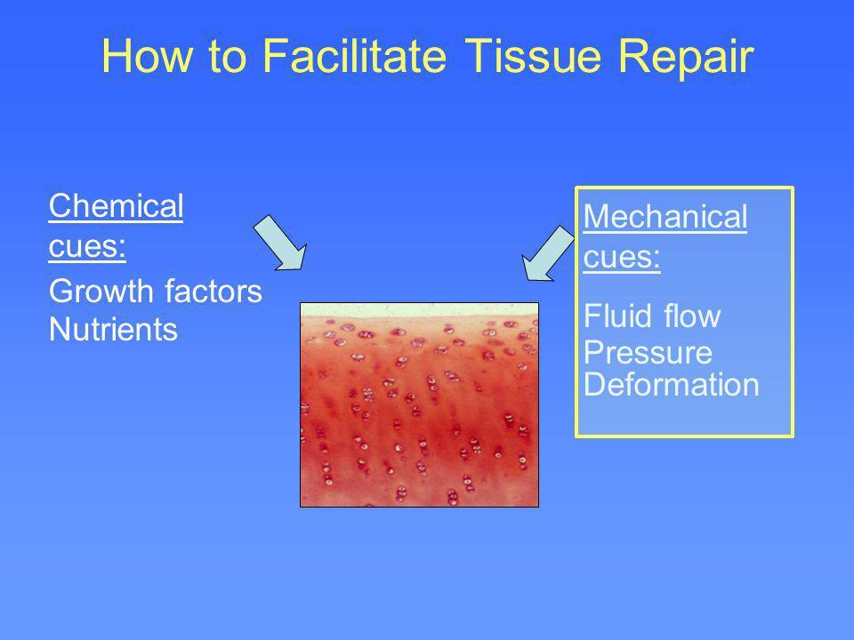How to Facilitate Tissue Repair Chemical cues: Growth factors Nutrients Mechanical cues: Fluid flow Pressure Deformation