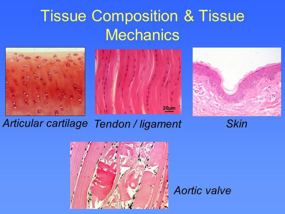 Tissue Composition & Tissue Mechanics Articular cartilage Tendon / ligament Skin Aortic valve