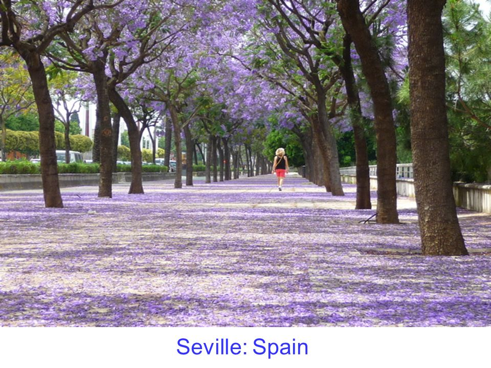Seville: Spain
