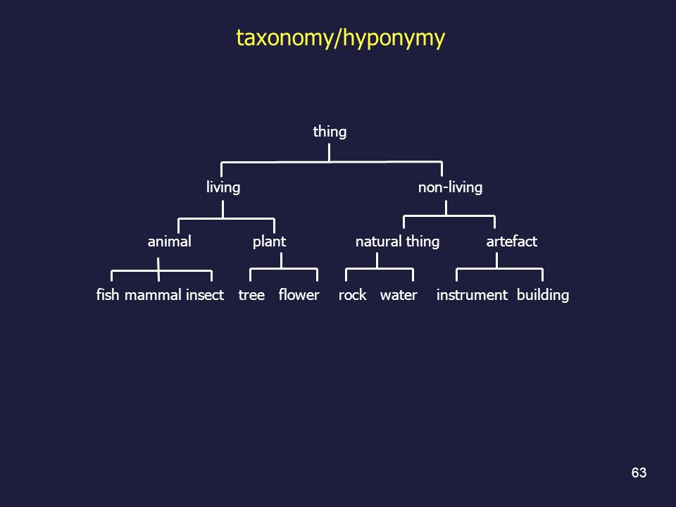 thing living non-living animal plant natural thing artefact fish mammal insect tree flower rock water instrument building taxonomy/hyponymy 63