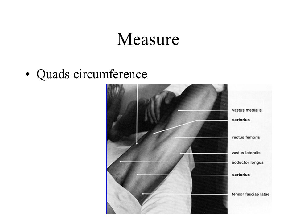 Measure Quads circumference