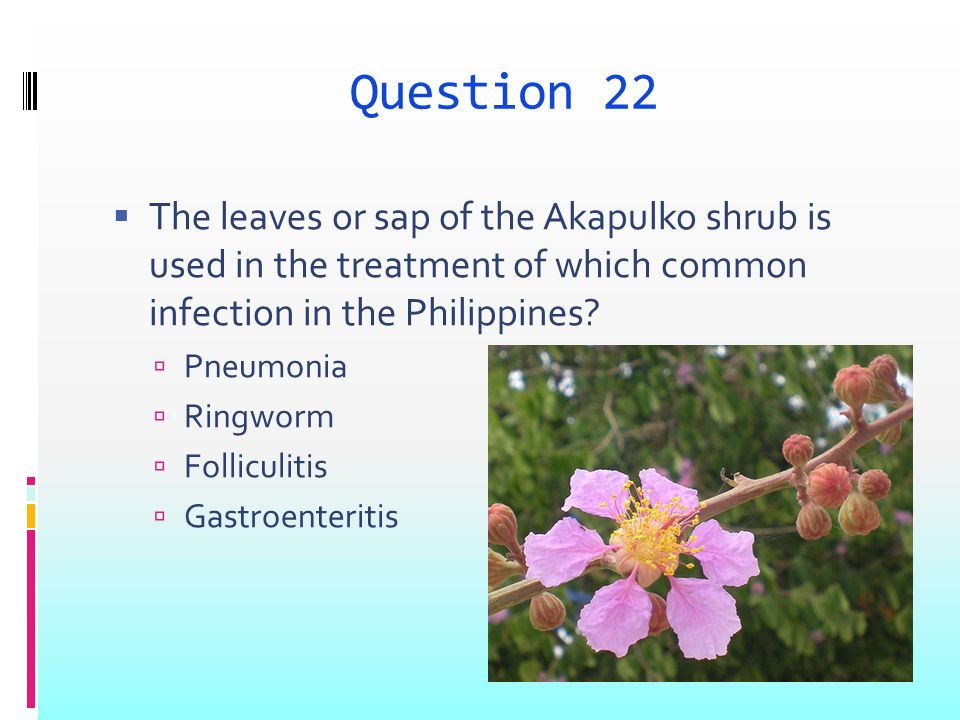 Question 22 The leaves or sap of the Akapulko shrub is used in the treatment of which common infection in the Philippines.
