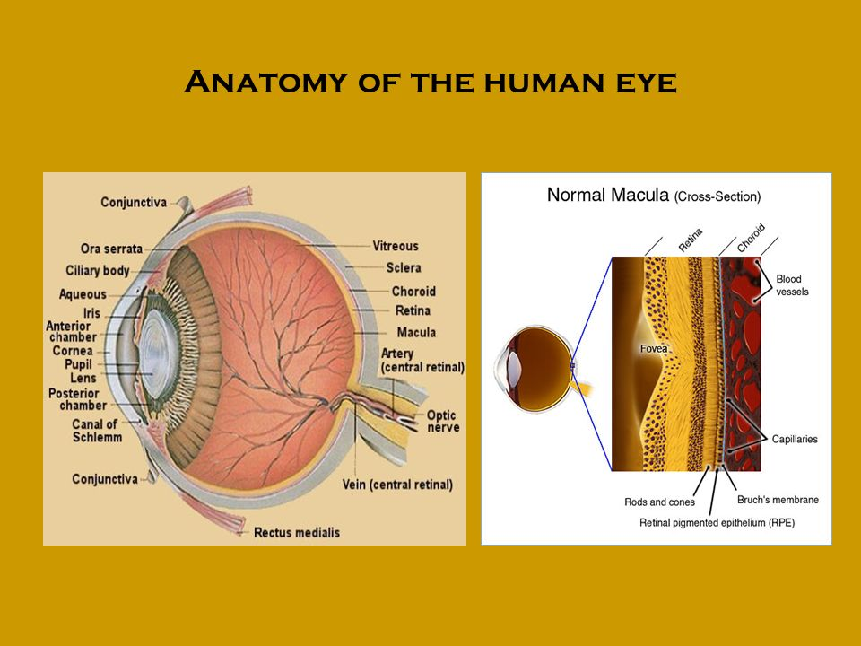Good history taking is vital History of presenting ophthalmic complaint/s Past ophthalmic history is important Current medical problems/ medications Past medical history could hold the clue