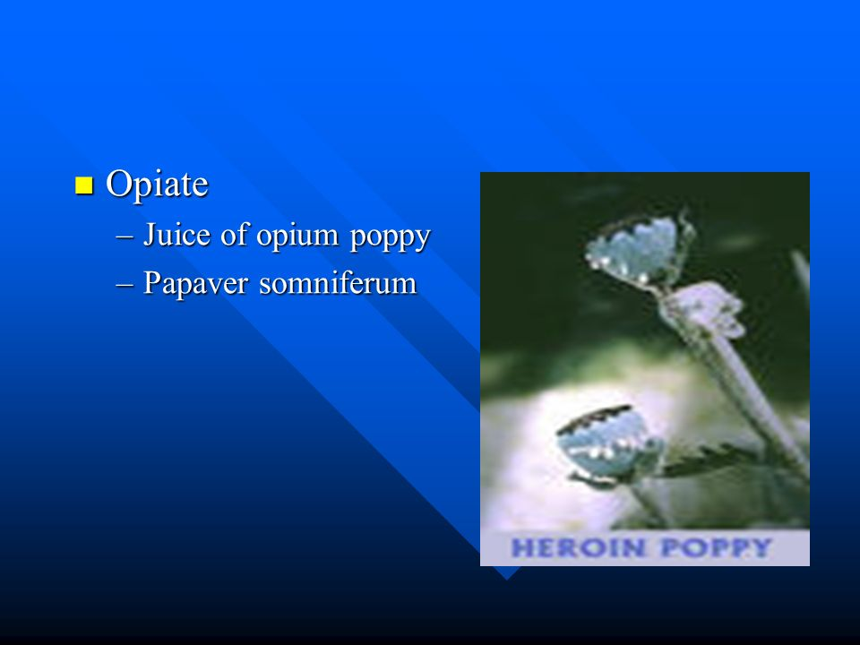 Opiate Opiate –Juice of opium poppy –Papaver somniferum