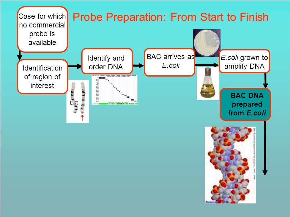 Case for which no commercial probe is available Probe Preparation: From Start to Finish Identify and order BAC Identify and order DNA BAC DNA prepared