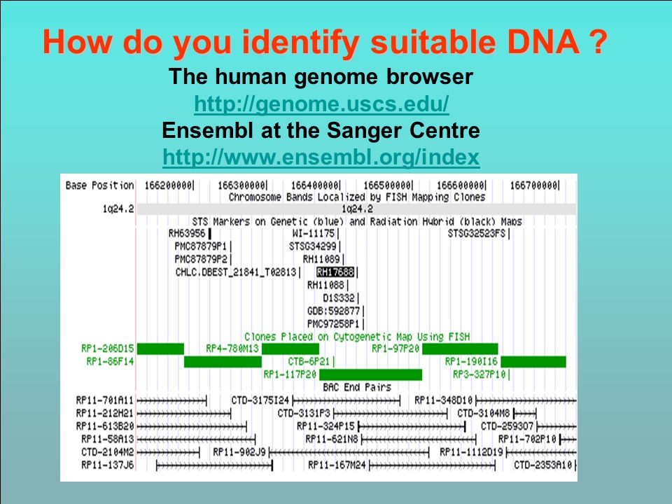 How do you identify suitable DNA ? The human genome browser http://genome.uscs.edu/ Ensembl at the Sanger Centre http://www.ensembl.org/index http://g