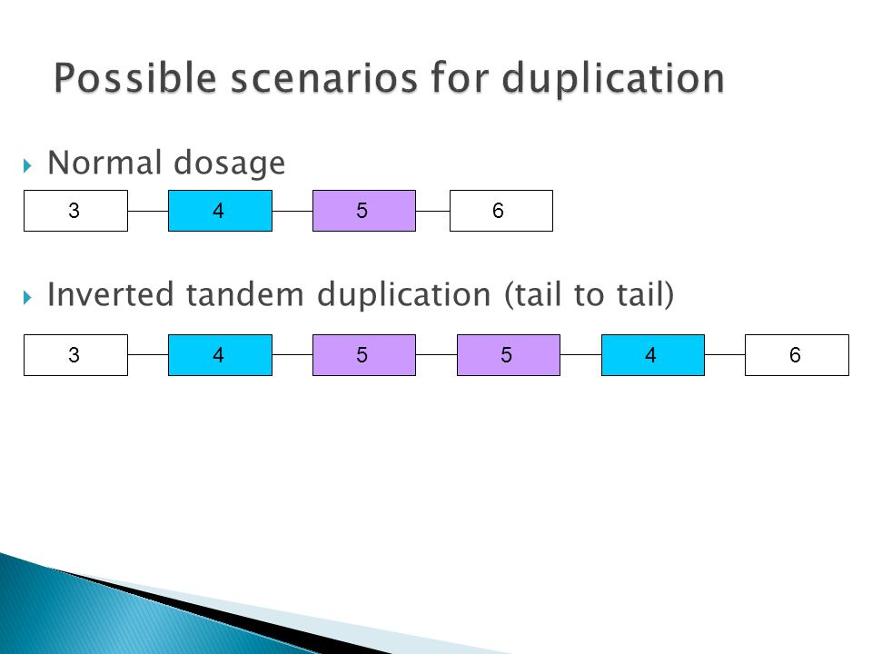 Inverted tandem duplication (tail to tail) 3455463456