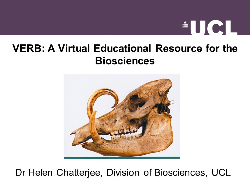 VERB: A Virtual Educational Resource for the Biosciences Dr Helen Chatterjee, Division of Biosciences, UCL