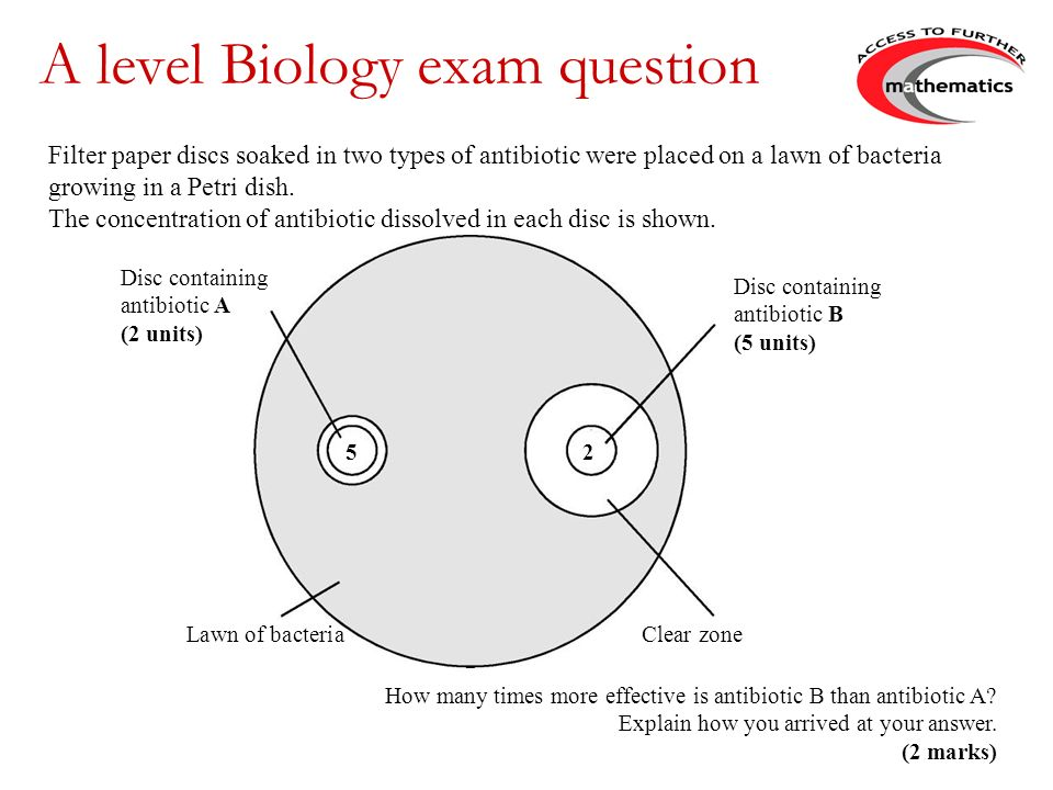 A level Biology exam question Disc containing antibiotic B (5 units) Disc containing antibiotic A (2 units) 5 2 Lawn of bacteria Clear zone Filter paper discs soaked in two types of antibiotic were placed on a lawn of bacteria growing in a Petri dish.