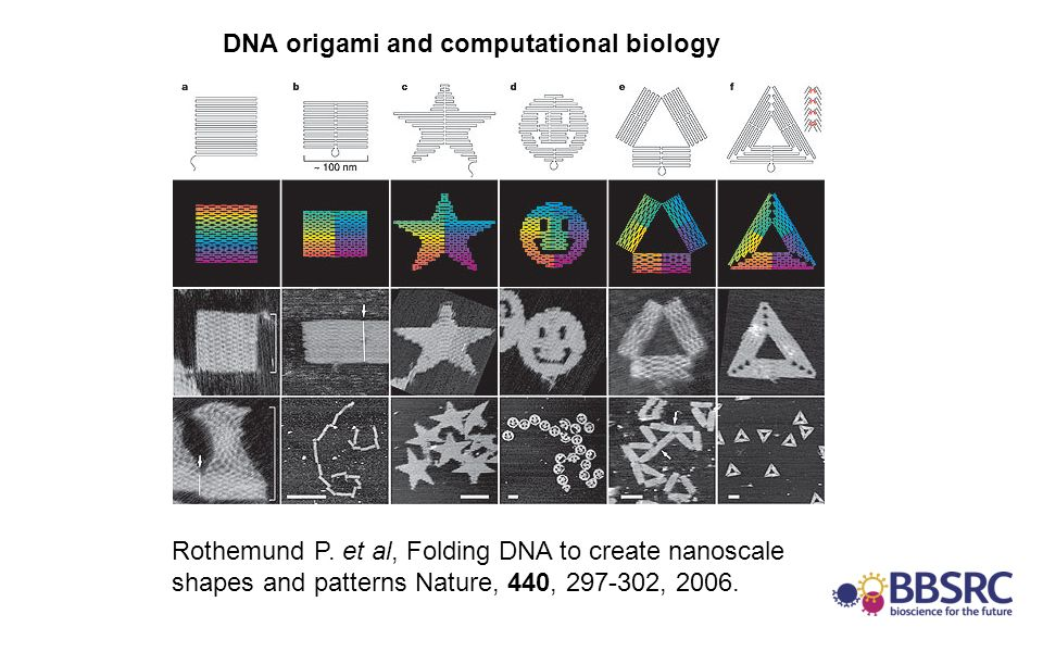 Rothemund P. et al, Folding DNA to create nanoscale shapes and patterns Nature, 440, 297-302, 2006. DNA origami and computational biology