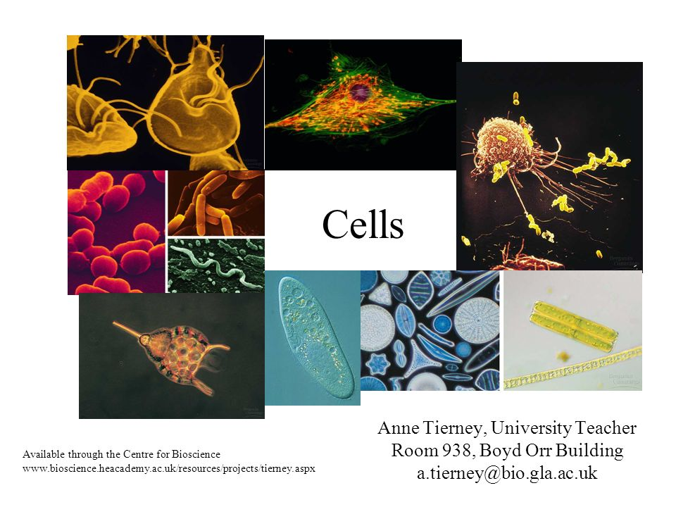 Cells Anne Tierney, University Teacher Room 938, Boyd Orr Building a.tierney@bio.gla.ac.uk Available through the Centre for Bioscience www.bioscience.