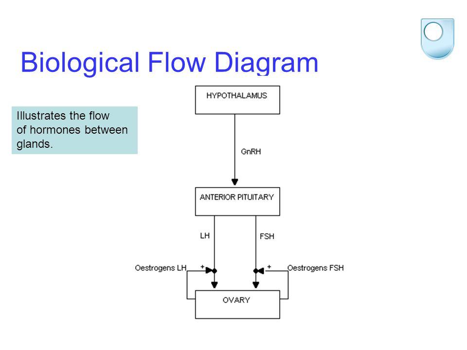 STEM 2012 Biological Flow Diagram Illustrates the flow of hormones between glands.