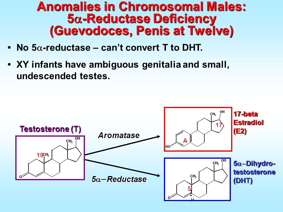 No 5 -reductase – cant convert T to DHT. Anomalies in Chromosomal Males: 5 -Reductase Deficiency (Guevodoces, Penis at Twelve) 5 Reductase 5 Dihydro-