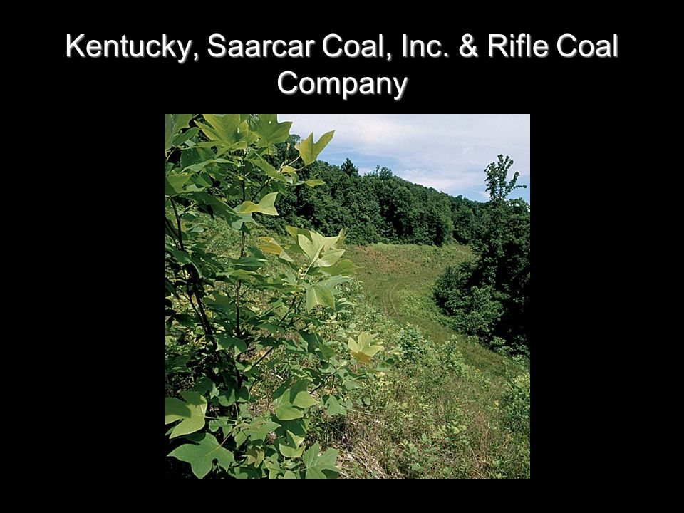 Kentucky, Saarcar Coal, Inc. & Rifle Coal Company
