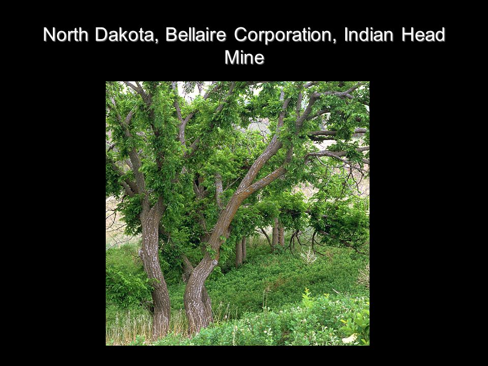 North Dakota, Bellaire Corporation, Indian Head Mine