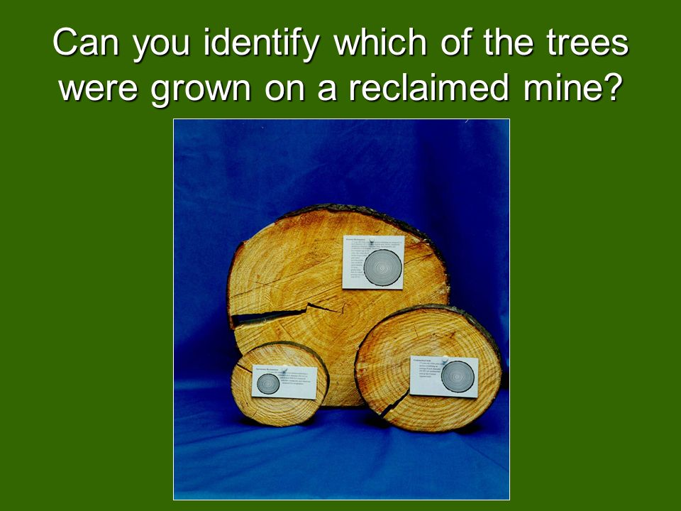 Can you identify which of the trees were grown on a reclaimed mine?